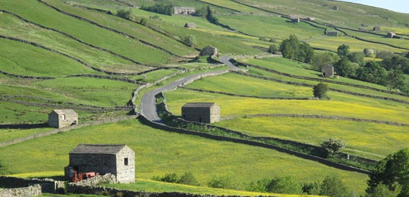 Drystone walls and field barns in Swaledale